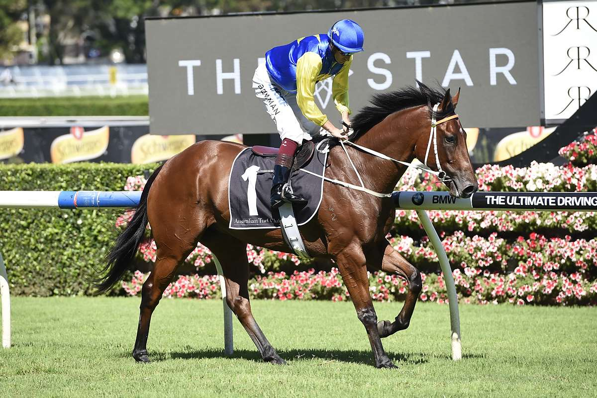 Gear Change To Sharpen Up War Horse Le Romain Home Of Racing